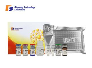 China Bovine High Precision NPD1 ELISA Test Kit Nuroprotectin D1 ELISA Kit With Strong Sensitivity supplier