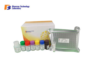 Endothelin 1 Rat ELISA Assay Kit , Mouse ELISA Test Kit With High Precision and Specificity