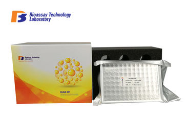 China 2 Hours Assay Length Rat ELISA Kit  Customization For Lipopolysaccharides Detection factory