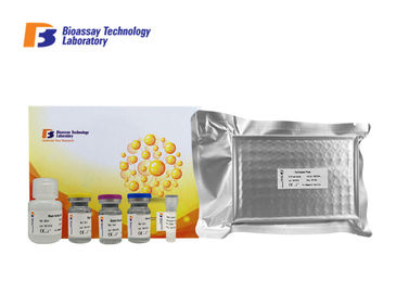 Rat GFAP ELISA Assay Kit Glial Fibrillary Acidic Protein ELISA Kit With Strong Sensitivity and Specificity