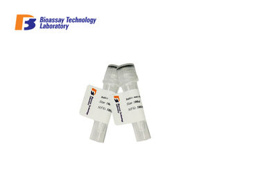 High Sensitivity Mouse Anti ABCB5 Monoclonal Antibodies With Antibody Custom Service