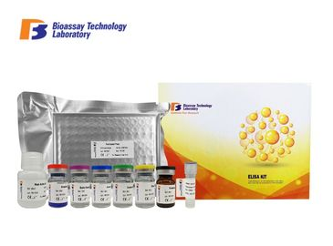 China Rat BFGF Sandwich ELISA Kit Basic Fibroblast Growth Factor ELISA Kit With 2 Hours Assay Time factory